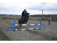 HORSE - WELSH SECTION D for part loan 2 days / week - Hatfield, St. Albans, Welwyn Garden City area