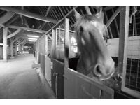 Nutbourne Farm Livery - three spaces available