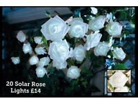 Solar rose lights
