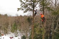 NOW HIRING ARBORISTS AND LABOURERS - COULSON BROS ARBORICULTURE