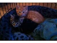 Kitten last one left