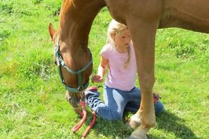 Let's Learn Emergency Equine First Aid in Kelowna