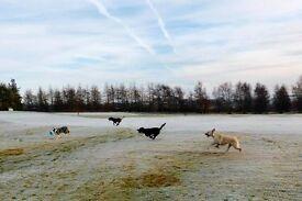 Dog Walker - East Kilbride