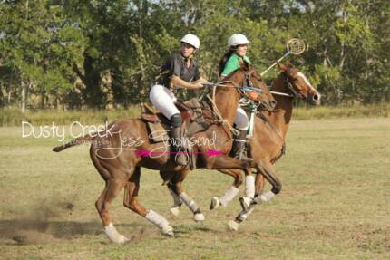 Experienced Polocrosse Mare North Arm Noosa Area Preview