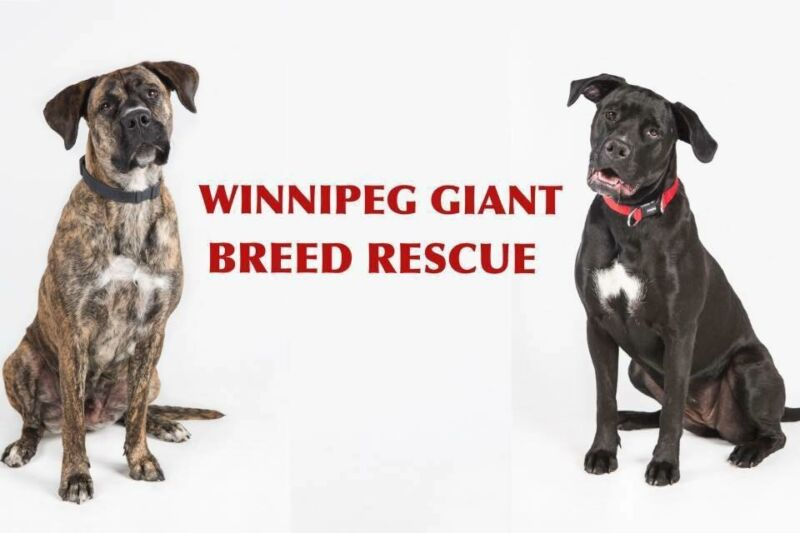 Large Breed Dog Rescue Address