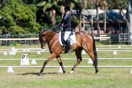 Beautiful Dressage Horse For Sale Ballina Ballina Area Preview