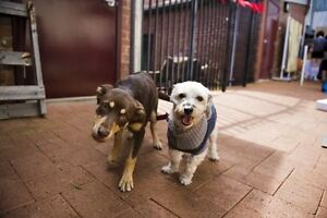 Doubleview Pet Sitters Doubleview Stirling Area Preview