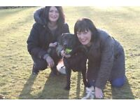 Dog Walking Service - Experienced, Friendly, Trustworthy And Reliable