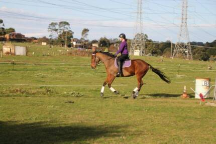 5yo TB gelding with eventing potential Narre Warren Casey Area Preview