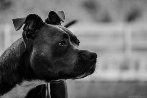 Dog Walking/Sitting Cranbourne West Casey Area Preview