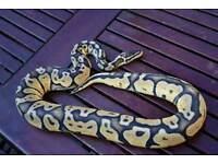 Super pastel male