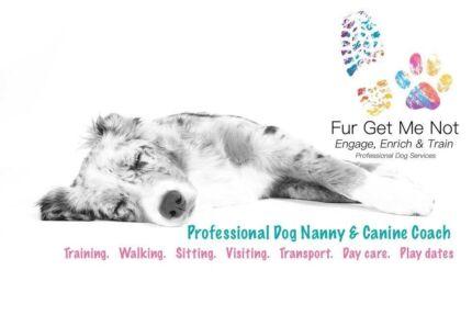 Professional Dog Nanny | Dog Walker