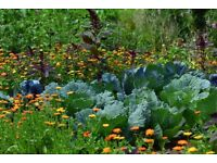 Plot of land wanted to create allotment - Dunfermline/West Fife area