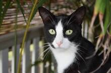 Alfie The Cat Needs A New Home Manly Brisbane South East Preview