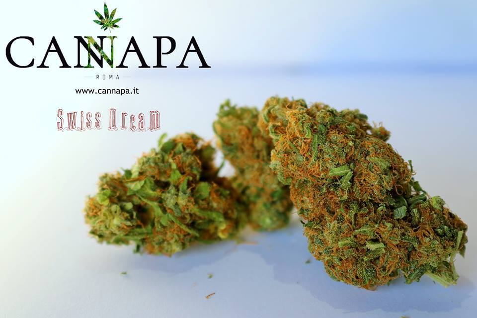 Fiori di Canapa Swiss Dream  marijuana cannabis light 3 Gr