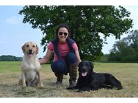 Dog Walker and Pet Sitter in Cheshire