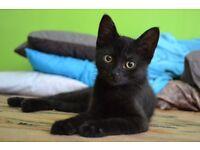 Sooky & Playful Kitten