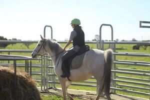 Pure Anglo Arab mare Waterloo Dardanup Area Preview