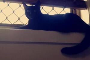 Free cat giveaway Caboolture Caboolture Area Preview