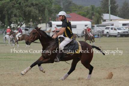 Stock horse gelding experienced Polocrosse North Arm Noosa Area Preview