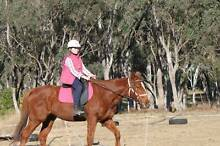 4 yr old TB Chestnut Mare Warwick Southern Downs Preview
