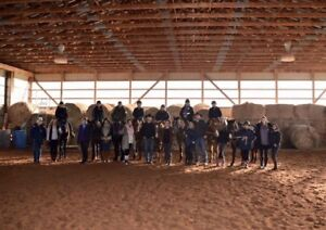 Horse Training/Lessons