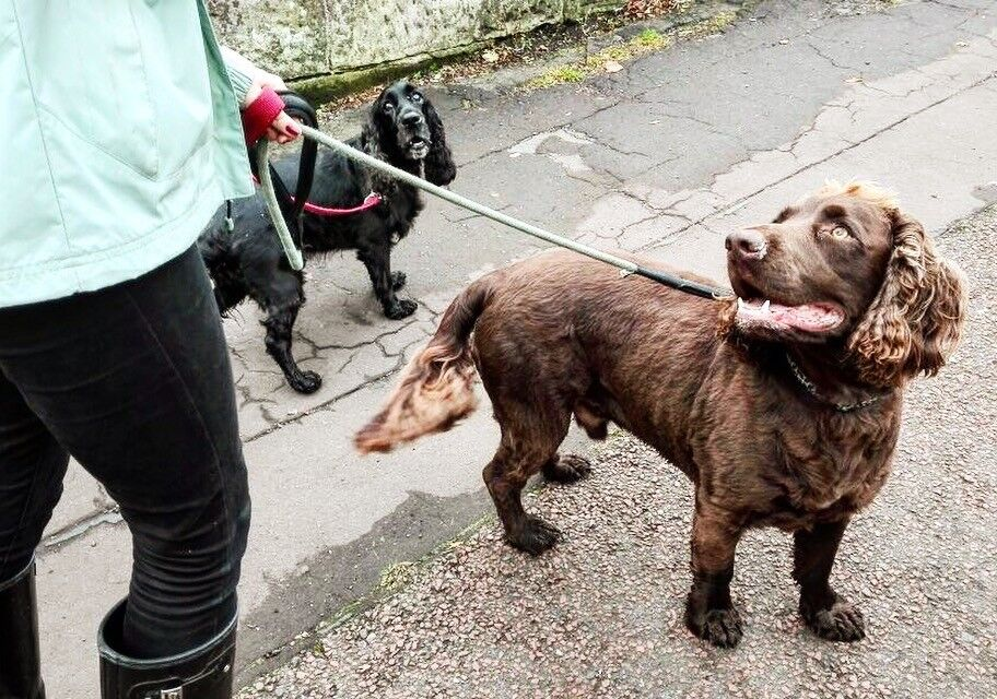 Individual Dog Walking & Pet Sitting by an experienced reliable dog walker Glasgow Southside from £8