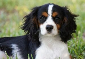 Puppy wanted for my mum! Hendra Brisbane North East Preview