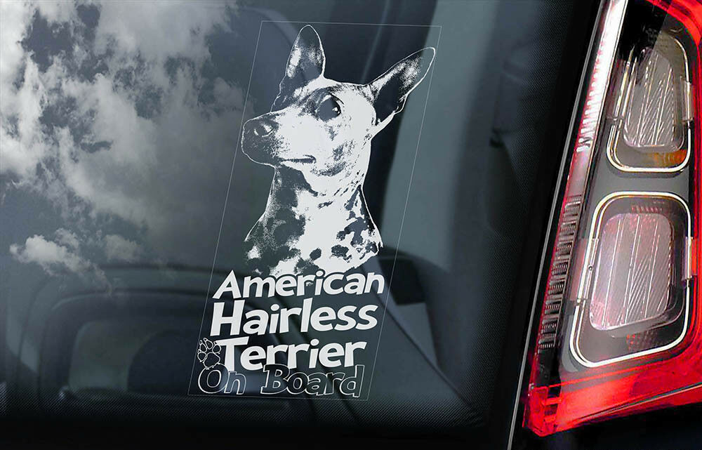 American Hairless Terrier - Car Window Sticker -Dog on Board decal sign AHT -V01