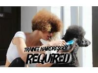 Trainee Hairdresser/Apprentice Required to join our creative and talented team