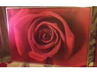 Large alluminium framed rose picture