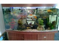 460l aquarium