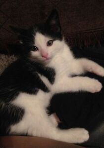 Tiny 10 week old kitten needs a loving home