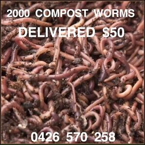 2000 COMPOST/ FISHING WORMS FREE VIC DELIVERY (500gr) Crib Point Mornington Peninsula Preview