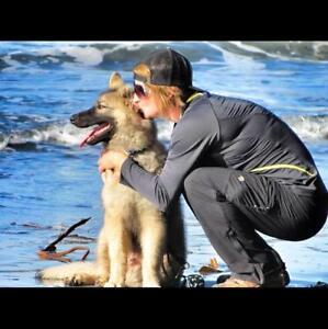 Dog Walker / Pet Visits - Saint-Paul and surrounding area