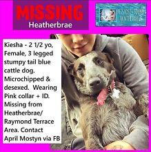 LOST DOG KIESHA!!! Kurri Kurri Cessnock Area Preview
