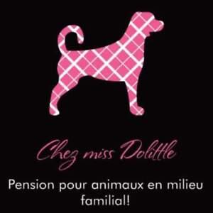 Pension pour animaux en milieu familial!