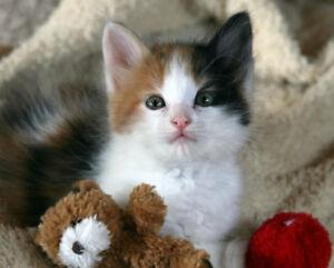 Cat-sitter in North York area