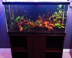 Full 37 Gallon Aquarium Kit - no fish