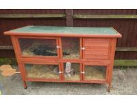 Free to good home 18 month old female Rabbit and hutch