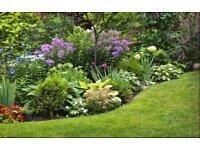 GARDEN PLANTS FLOWERS SHRUBS CUTTINGS TREES