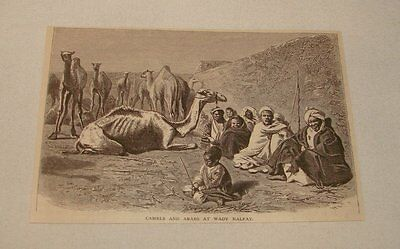 1877 magazine engraving ~ CAMELS AND ARABS AT WADY HALFAY, Egypt