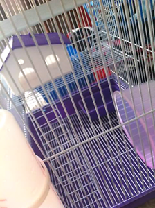 Mouse cage & food Rutherford Maitland Area Preview