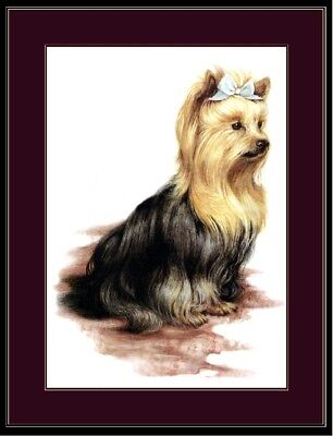 English Picture Print Pet Yorkshire Terrier Dog  Art  ()