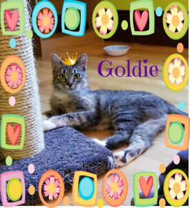 Goldie needs a home!