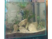 Tropical Stylish Fish Tank Full Set Up + Fish *Can Deliver*