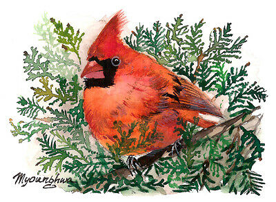 ACEO Limited Edition-Cardinal in Cedar, Art print of an ACEO original watercolor