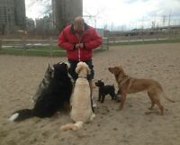 RELIABLE AND VERY EXPERIENCED DOG WALKERS SOUTH ETOBICOKE