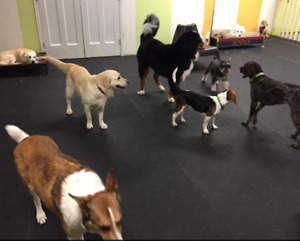 Small business in Burnaby / Dog Daycare and Grooming