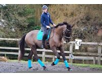 Freelance Groom and Rider - Surrey